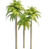 South America Palms Tree
