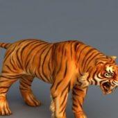 South China Tiger Animal