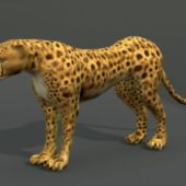 African Cheetah Wild Animal