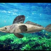 Ocean Icefish Fish Animal