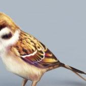 Sparrow Bird Nature Animal