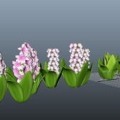 Nature Spring Hyacinth Flower