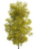 Nature Green Spring Birch Tree