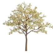 Spring Blooming Plant Apple Tree