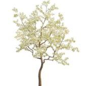Eoropean Spring Pear Tree