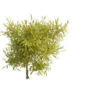 Nature Green Spring Willow Branches