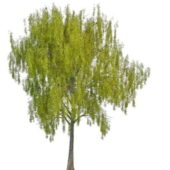 Nature Spring Willow Tree
