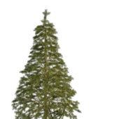 European Spruce Pine Tree