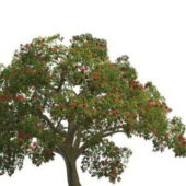 Summer Flowering Green Tree