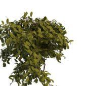 Nature Green Summer Tree Branch