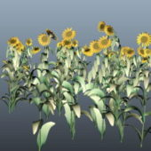 Tropical Sunflower Plants
