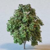 Nature Sweet Chestnut Tree