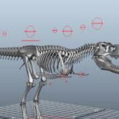 Dinosaur T-rex Skeleton Rigged