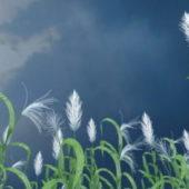 Garden Tall Reed Grass