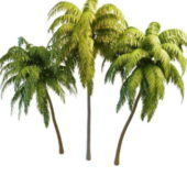Coconut Palm Trees Collection