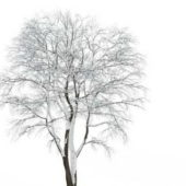 Winter Tall Tree Covered By Snow
