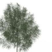 Green Texas Ash Tree