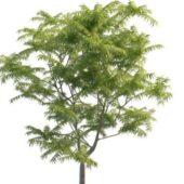 Green Toona Tree