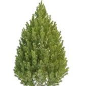 Garden Topiary Pine Tree