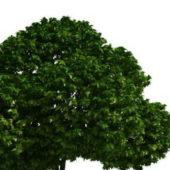 Garden Topiary Tree