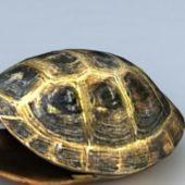Tortoise Shell Wild Animal