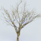 Branches Tree Wrap