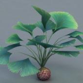 Nature Broad Leaf Plant