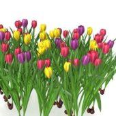 Green Tulips Flowers Field