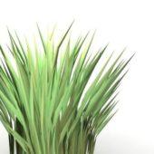 Garden Tussock Grass
