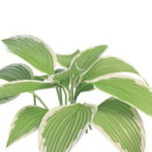 Variegated Garden Leaf Plant