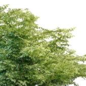 Nature Green Variegated Leaf Tree