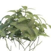 Green Variegated Plant