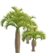 Varieties Of Bottle Nature Palm Tree