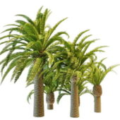 Collection Of Pineapple Palm Trees