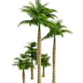Royal Palms Tree Collection