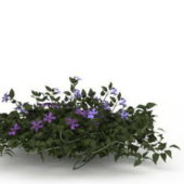 Plant Vinca Difformis Flowering Shrub
