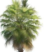 Wild Washington Palm Tree