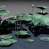 Lily Plant In Pond