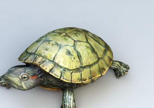 Water Turtle Animal