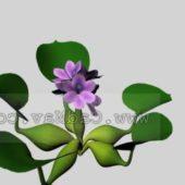 Garden Plant Water Hyacinth