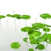 Lily Lotus Flower