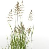 Garden Water Reed Plant