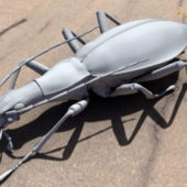 Animal Weevil Beetle