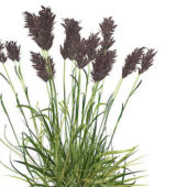 Nature Wetland Reed Plant
