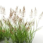 Wetland Reeds Plant