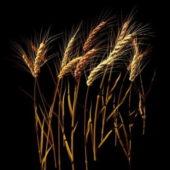 Wheat Stalk Plant
