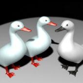 Animal White Ducks