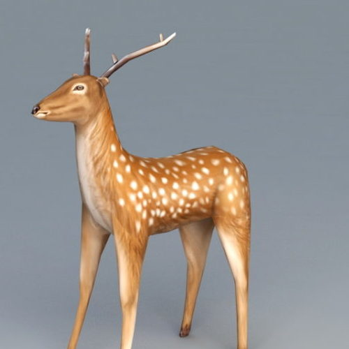 White Spotted Deer Animal