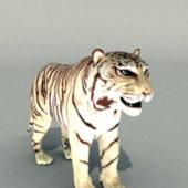 Wild White Tiger Animal Rigged