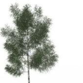 Nature White Ash Tree
